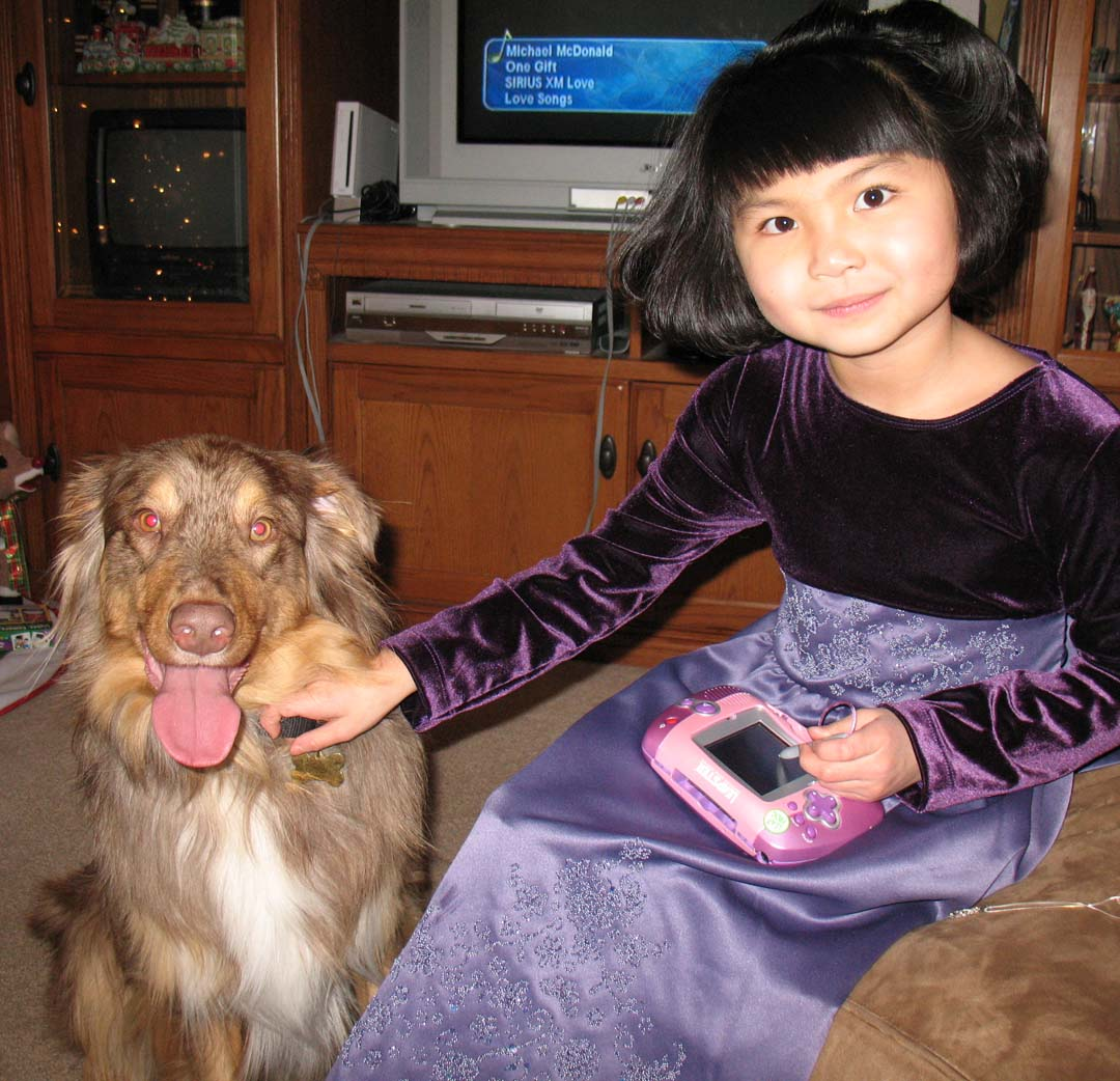 e-collar dog training