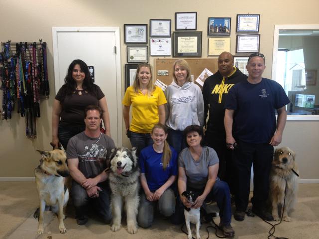 remote dog collar training