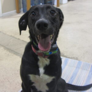 remote collar dog training