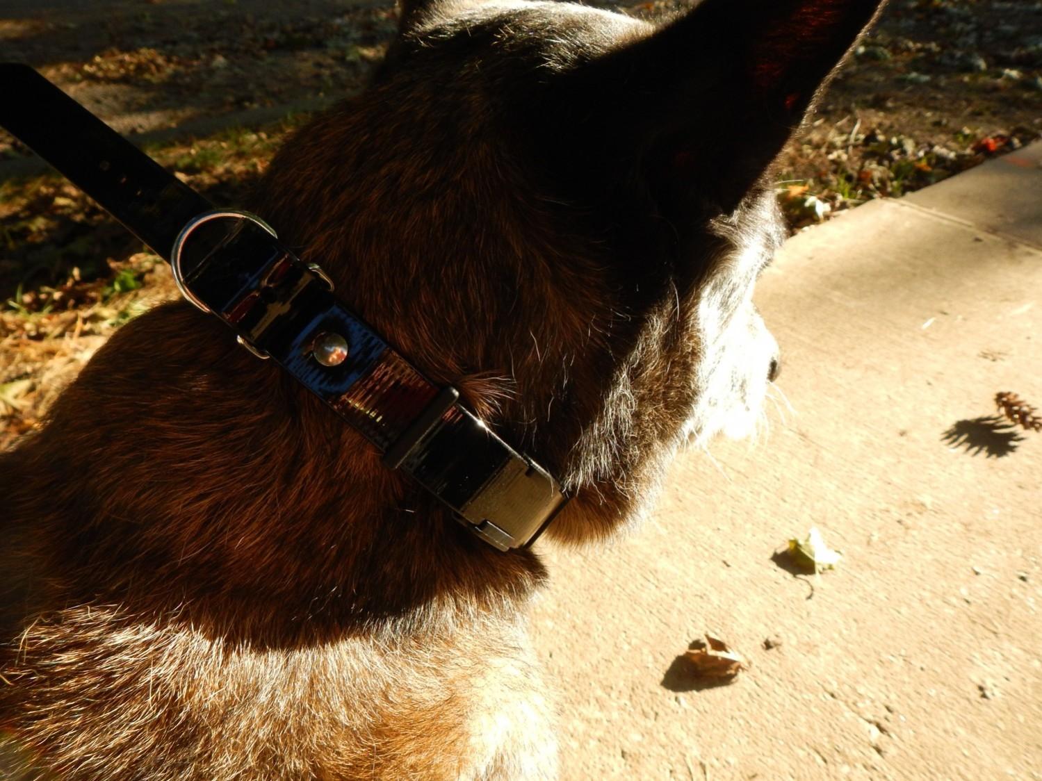 Dogtra ARC dog collar