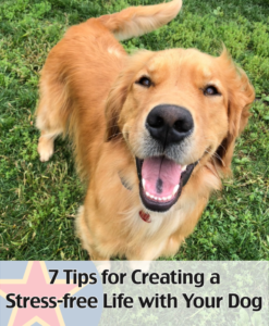 7 Tips for Creating a Stress-Free Life with Your Dog. Free download. Written by Robin MacFarlane