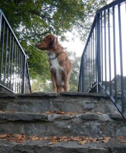 Online Dog Training Class - One-to-One Distance Coaching