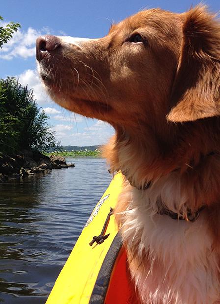 place command kayak